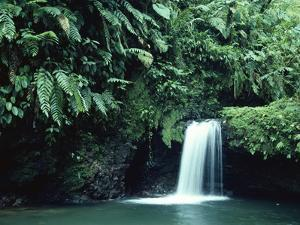Waterfall in Cloud Forest, Braulio Carrillo National Park, Costa Rica by Michael and Patricia Fogden/Minden Pictures