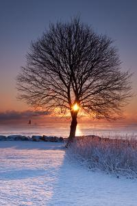 Sun In Tree by Michael Blanchette Photography