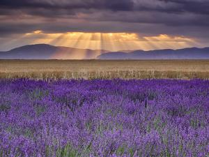 Sunbeams over Lavender by Michael Blanchette Photography
