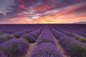 Sunrise over Lavender by Michael Blanchette Photography