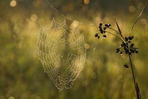 Web Of Dew by Michael Blanchette Photography