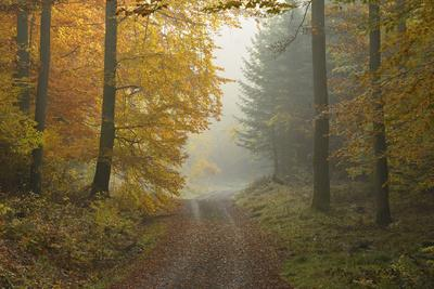 Path through Beech Forest in Autumn, Spessart, Bavaria, Germany