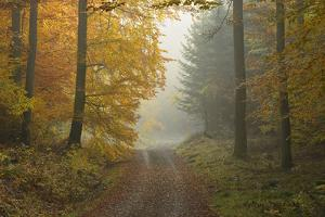 Path through Beech Forest in Autumn, Spessart, Bavaria, Germany by Michael Breuer