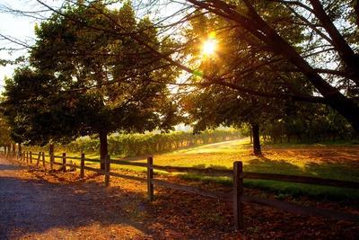 Dreamland Vineyard
