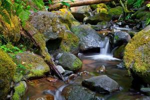 Mossy Stream by Michael Broom