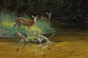 Fawn Brook by Michael Budden