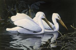 Pelicans by Michael Budden