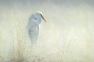 Solitude Egret by Michael Budden