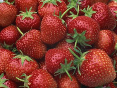 Close-Up of a Number of Red Strawberries in Kent, England, United Kingdom, Europe