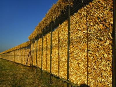 Corn in a Storage, Loire Valley, France