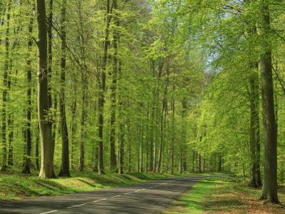 Empty Rural Road Through Woodland in the Forest of Compiegne, Aisne, Picardie, France