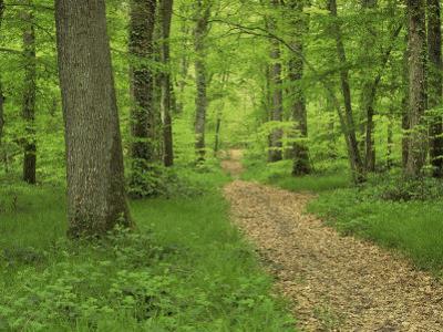 Forest of Chambord, Loir Et Cher, Loire Centre, France