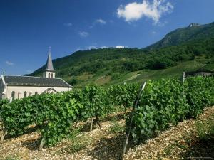 Jonjieux (Jonzieux), Savoie Vineyards, Rhone Alpes, France by Michael Busselle