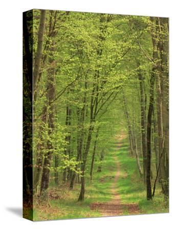 Narrow Path Through the Trees, Forest of Brotonne, Near Routout, Haute Normandie, France