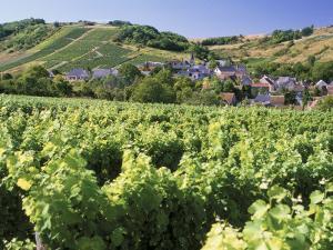 Vineyards at Bue, Near Sancerre, Loire Centre, France by Michael Busselle