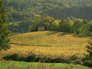 Vineyards in Autumn, Near Arbois, Jura, Franche Comte, France by Michael Busselle