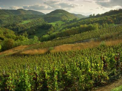 Vineyards Near Cerdon, Bugey, Ain, Rhone Alpes, France, Europe