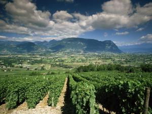 Vineyards Near Chambery, Savoie, Rhone Alpes, France by Michael Busselle