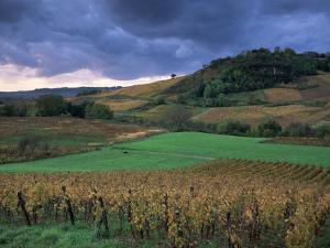 Vineyards Near Chateau Chalon, Jura, Franche Comte, France by Michael Busselle