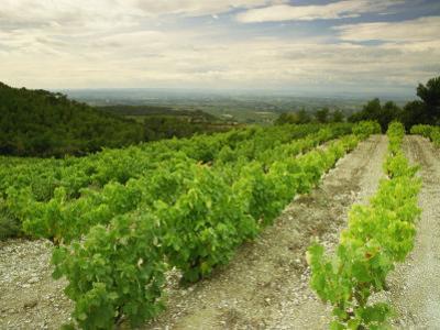 Vineyards Near Gigondas, Vaucluse, Provence, France, Europe