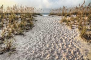 Path to the Beach by Michael Cahill