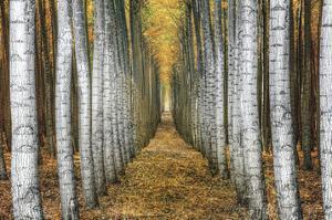 Tree Farm by Michael Cahill