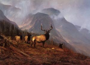 Bookcliffs Elk I by Michael Coleman