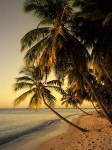 Beach at Sunset, Trinidad, Caribbean by Michael DeFreitas