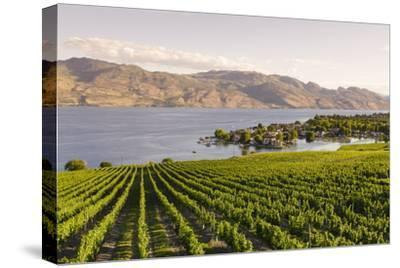 Grape Vines and Okanagan Lake at Quails Gate Winery