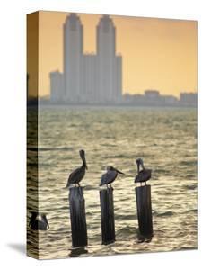 San Padre Island, Texas, United States of America, North America by Michael DeFreitas