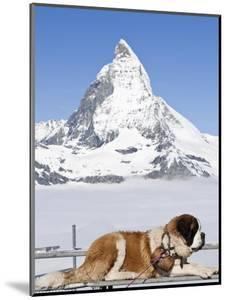 St. Bernard Dog and Matterhorn From Atop Gornergrat, Switzerland, Europe by Michael DeFreitas
