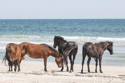 Wild Mustangs in Currituck National Wildlife Refuge, Corolla, Outer Banks, North Carolina by Michael DeFreitas