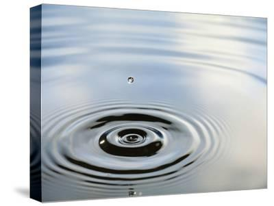 Ripples Created by a Drop of Water Splashing into a Calm Pool