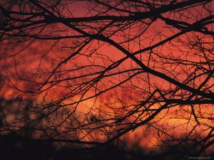 Twilight View Through Silhouetted Tree Branches by Michael Fay