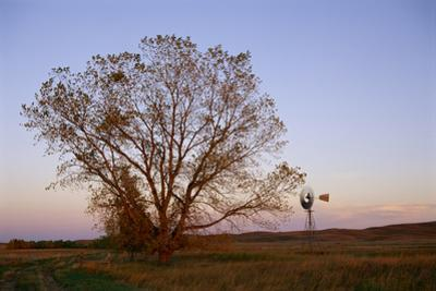 A Cottonwood Tree and a Windmill in a Prairie Landscape by Michael Forsberg