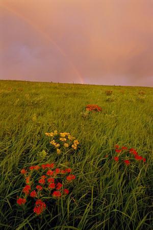 A Rainbow Above the Prairie at Sunrise