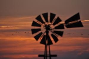 A Silhouetted Windmill and a Flock of Migrating Sandhill Cranes at Sunset by Michael Forsberg