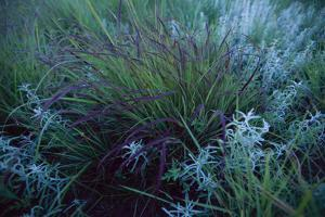 Close Up of Bluestem and Sage by Michael Forsberg