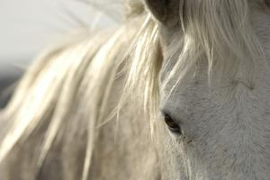 Close Up Portrait of a Horse by Michael Forsberg