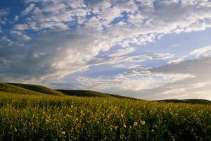 Clouds over a Field of Morning Glory Wildflowers by Michael Forsberg