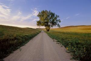 Landscape of a Country Road and Cottonwood Tree by Michael Forsberg