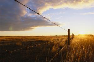 Sunrise over a Remote Barbed-Wire Fence by Michael Forsberg