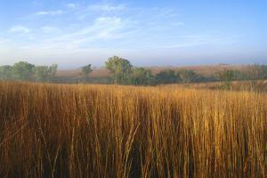 Tall Bluestem Grass Covers the Countryside by Michael Forsberg