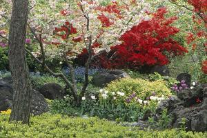 Spring Garden with Red Leaves on Tree and Blossom by Michael Freeman