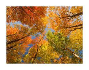 Autumn Spendour by Michael Hudson