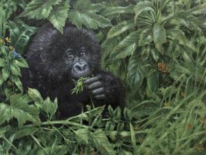 Gorilla 1 by Michael Jackson