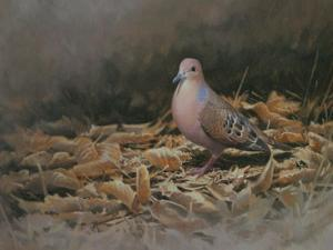 Mourning Dove by Michael Jackson