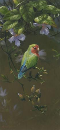 Peach Faced Lovebird 2