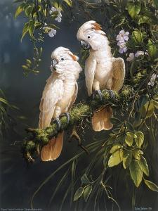 Salmon Crested Cockatoos by Michael Jackson