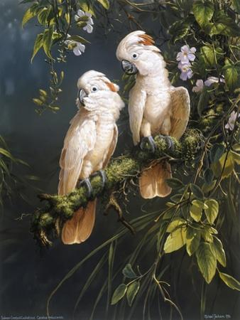 Salmon Crested Cockatoos by Michael Jackson